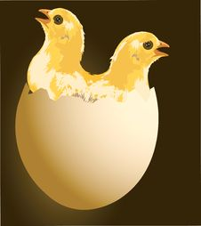 Free Two Chickens Royalty Free Stock Photos - 3504468