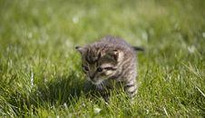Free Kitty Royalty Free Stock Photo - 3504595