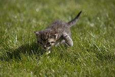 Free Kitty Royalty Free Stock Images - 3504599