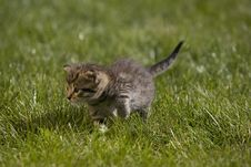 Free Kitty Stock Photos - 3504603