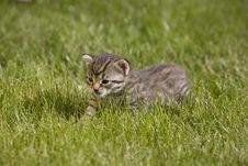 Free Kitty Royalty Free Stock Photo - 3504715