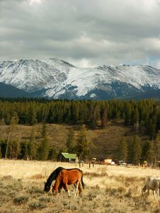 Free Colorado Mountains And Horses Stock Image - 3505661