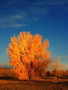 Free Colorful Autumn Tree Royalty Free Stock Photo - 3505915