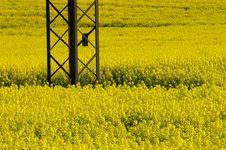 Free Yellow Field Royalty Free Stock Photography - 3506347