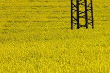 Free Yellow Field Stock Image - 3506541