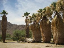 Zzyzx - Mojave Nat. Preserve Royalty Free Stock Images
