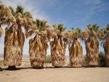 Free Zzyzx - Mojave Nat. Preserve Stock Photography - 3506792