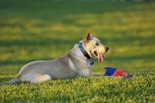 Free Park Pooch Stock Images - 3506874