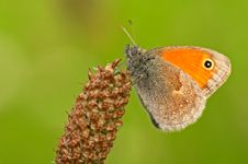 Free Butterfly Stock Image - 3507341