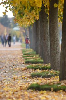 Free Autumn Alley Stock Photography - 3507472