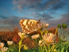 Free Portrait Of The Butterfly Royalty Free Stock Photos - 3507728
