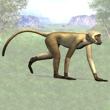 Free Monkey 04 Royalty Free Stock Photo - 3508015