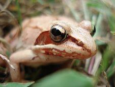 Free Frog Eye Stock Photography - 3509262