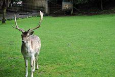 Free Deer Stock Photos - 35000423