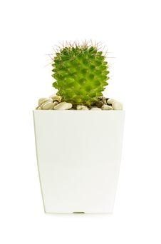 Free Little Cactus Stock Photos - 35001303