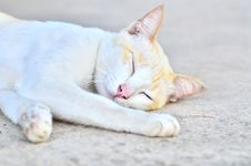 Free Sleeping Cat Stock Photography - 35004082