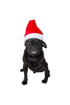 Free Black Pug Wearing Christmas Attire 2 Royalty Free Stock Image - 35006356