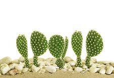 Free Little Cactus Stock Image - 35007521