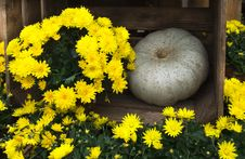 Free Flowers And Pumpkin Decoration Stock Photography - 35017612