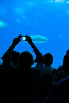Free Person Taking A Photograph To The Fishes In Aquarium. Royalty Free Stock Photos - 35017938
