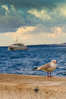 Free Seagull And Boat Stock Photography - 35024332