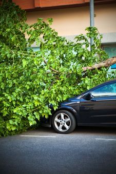 Free Broken Tree On A Car, After A Wind Storm. Royalty Free Stock Photo - 35024365