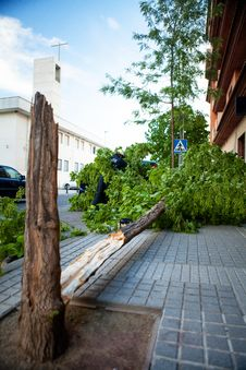 Free Broken Tree After A Wind Storm. Stock Photography - 35024532