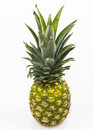 Free Pineaple Stock Photography - 35031092