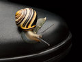 Free Garden Snail On A Boot Royalty Free Stock Photo - 35039215