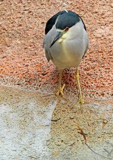 Free Heron Stock Images - 35037594