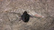 Beetle On The Stump Stock Photos
