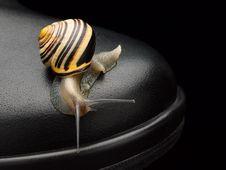 Free Garden Snail On A Boot Stock Photo - 35039170