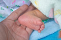 Free Newborn Baby Feet Royalty Free Stock Photo - 35041815