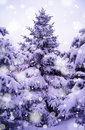 Free Christmas Trees Under Beautiful Snow Cover Stock Photo - 35042460
