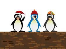Free Standing Penguin On The Wall Royalty Free Stock Photography - 35041407