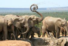 Free Elephants Spraying Spiral Stock Photo - 35042220