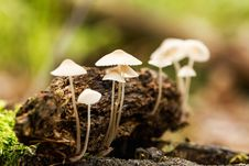 Free Mushrooms Stock Photography - 35044042