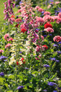 Free Colorful Foxglove Flowers Royalty Free Stock Photos - 35054598