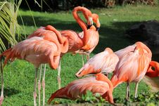 Free Flamingos Stock Images - 35054614