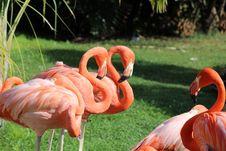 Free Flamingos Stock Images - 35054684