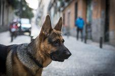 Free German Shepherd Stock Photos - 35057033