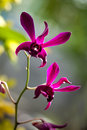 Free Violet Orchid Stock Image - 35061021