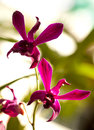 Free Violet Orchid Royalty Free Stock Images - 35061059