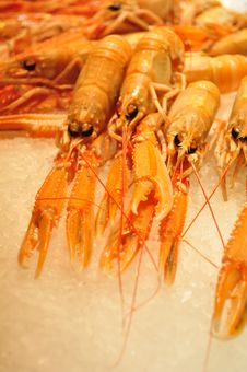 Free Prawn Royalty Free Stock Photos - 35063598