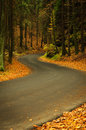 Free Autumn Asphalt Road Royalty Free Stock Photo - 35070325