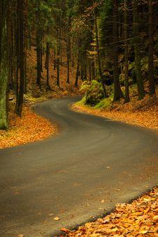 Autumn Asphalt Road Royalty Free Stock Photo