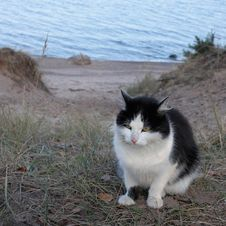 Free Cat Sit On A Sandy Beach Royalty Free Stock Photos - 35076068