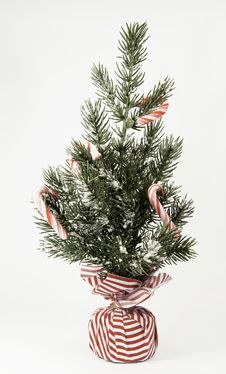 Free Peppermint Stick Tree Royalty Free Stock Photos - 35077688
