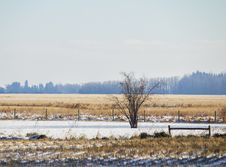 Free A Bare Tree By A Fence Royalty Free Stock Image - 35079486