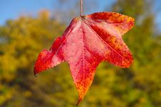 Free Fall S First Color Royalty Free Stock Images - 35082149